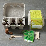 Herb Growing Kit