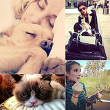 Celebrity Pets We're Thankful For This November