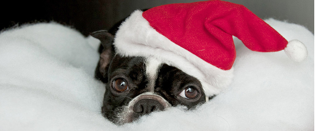 Dogs Donning Santa Hats: A Double Dose of Cute