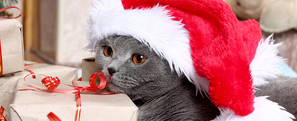 8 Supercute Stocking Stuffers For Cats