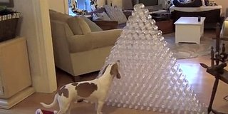 Dog Gets 210 Water Bottles For Christmas, Goes Absolutely Bonkers