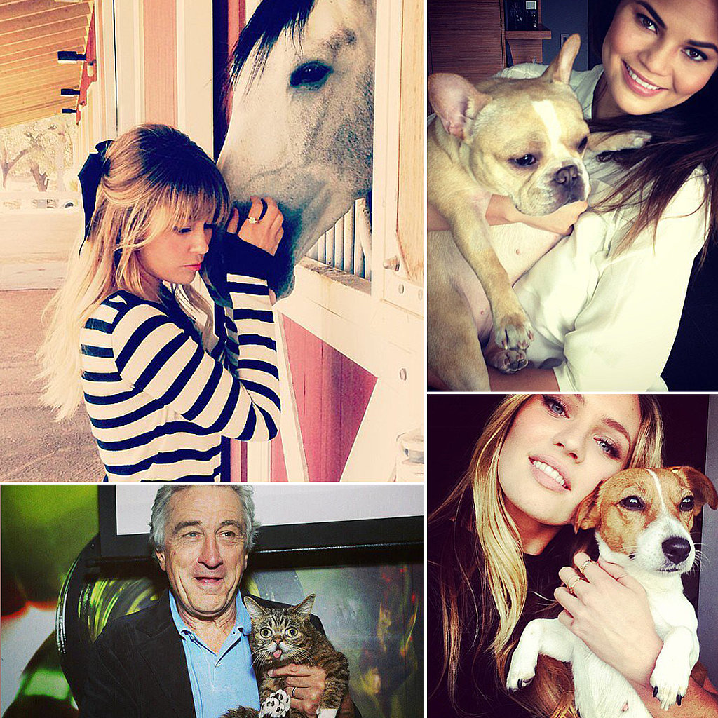 The Best Celebrity Pet Instagram Pictures of 2013