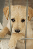 Give a Shelter Pet a Home
