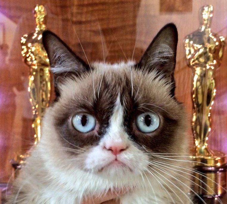 Meet Grumpy Cat