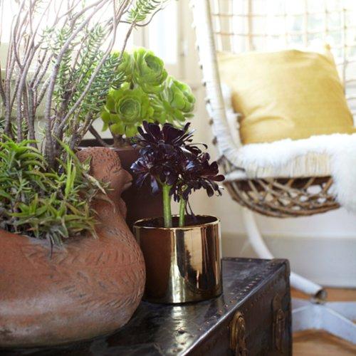 Easy, Low-Maintenance Houseplants