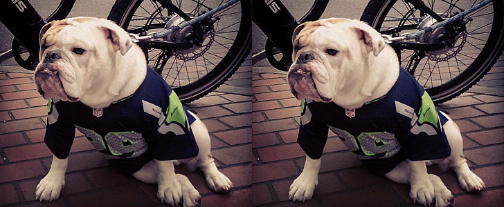 Instagram Challenge: Show Your Pet's Super Bowl Team Spirit