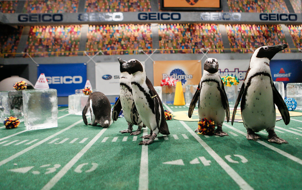 Penguin Cheerleaders!