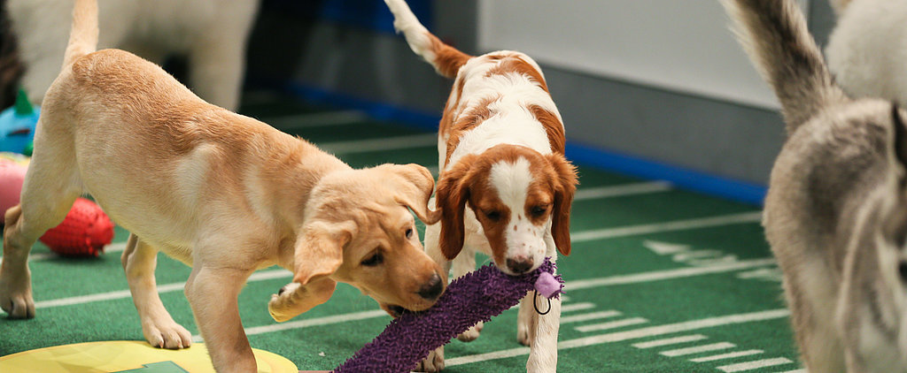 Puppies, Penguins, and Kittens Unite For Puppy Bowl X