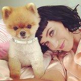 Katy Perry cozied up to Jiff the Pomeranian. Source: Instagram user katyperry