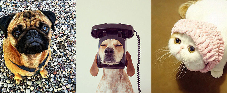 Insta-Cheer! Animals You Should Be Following on Instagram