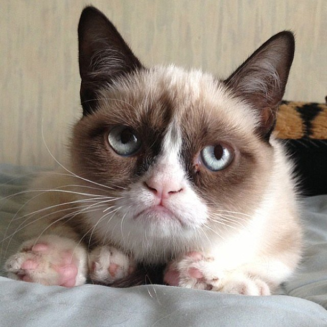 Grumpy Cat wasn't impressed with February. Source: Instagram user grumpycat