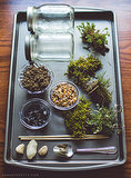 DIY Moss Terrarium Craft