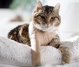 Top 5 Cat Injuries and How to Avoid Them