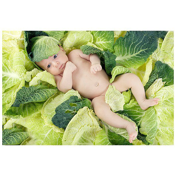 On a Pile of Cabbage