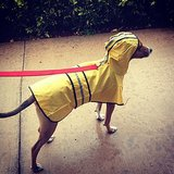 Winner Raincoat