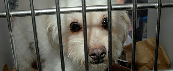 10 Mythbusting Realities About Shelter Dogs