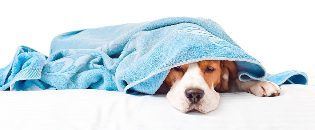 10 Signs of Seasonal Allergies in Pets