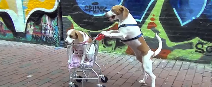 Pet Video of the Day: Two Dogs and a Shopping Cart