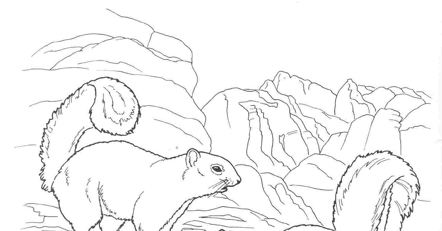 Desert animals coloring pages the rock squirrel for Desert animal coloring pages