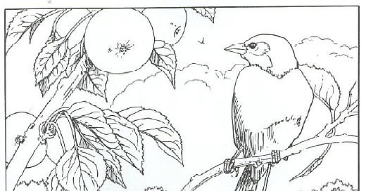 baltimore orioles coloring pages - photo#35