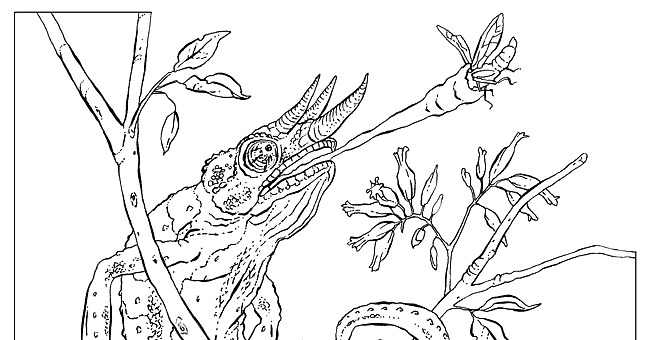 national geographic animal coloring pages - photo#5