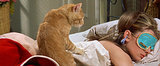 12 Signs You're a Cat Lady (and Purrfectly Happy With It)