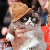 Grumpy Cat in Pharrell's Hat at the MTV Movie Awards 2014