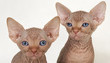 10 Cute Hairless Animals