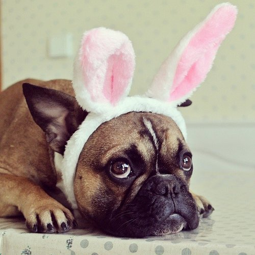 Pets Dressed at the Easter Bunny
