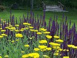 Garden Color: Lighten and Brighten With Yellow (10 photos)