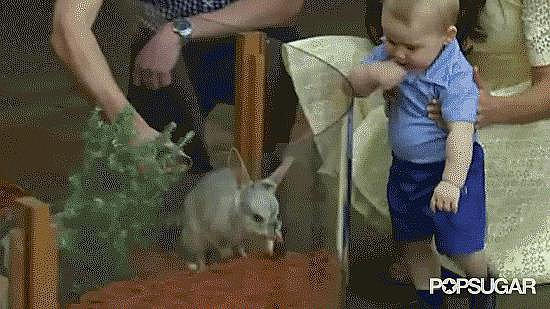 When Prince George met George the Bilby!