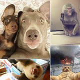 The 20 Best Animal Selfies of All Time