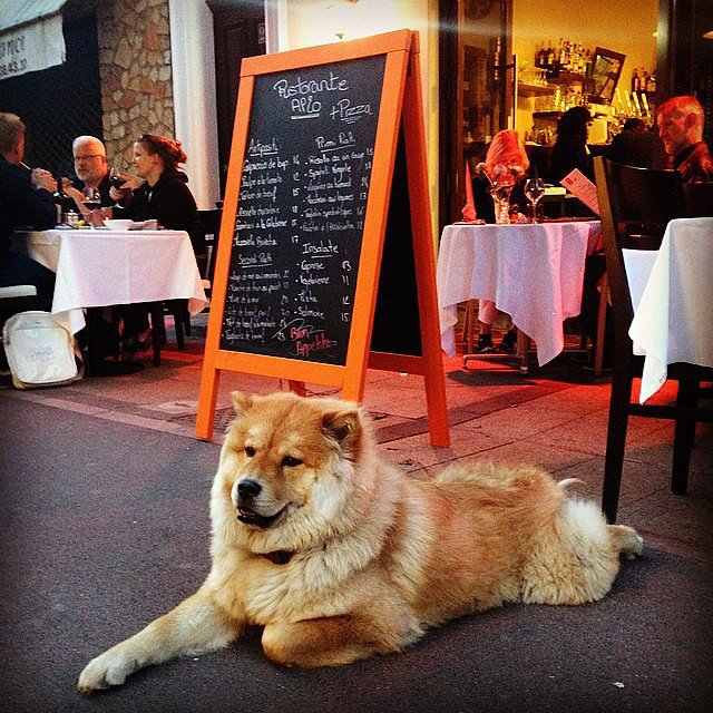 Coco the Chow Chow, a fixture in her Cannes neighborhood, made herself comfortable outside a restaurant.