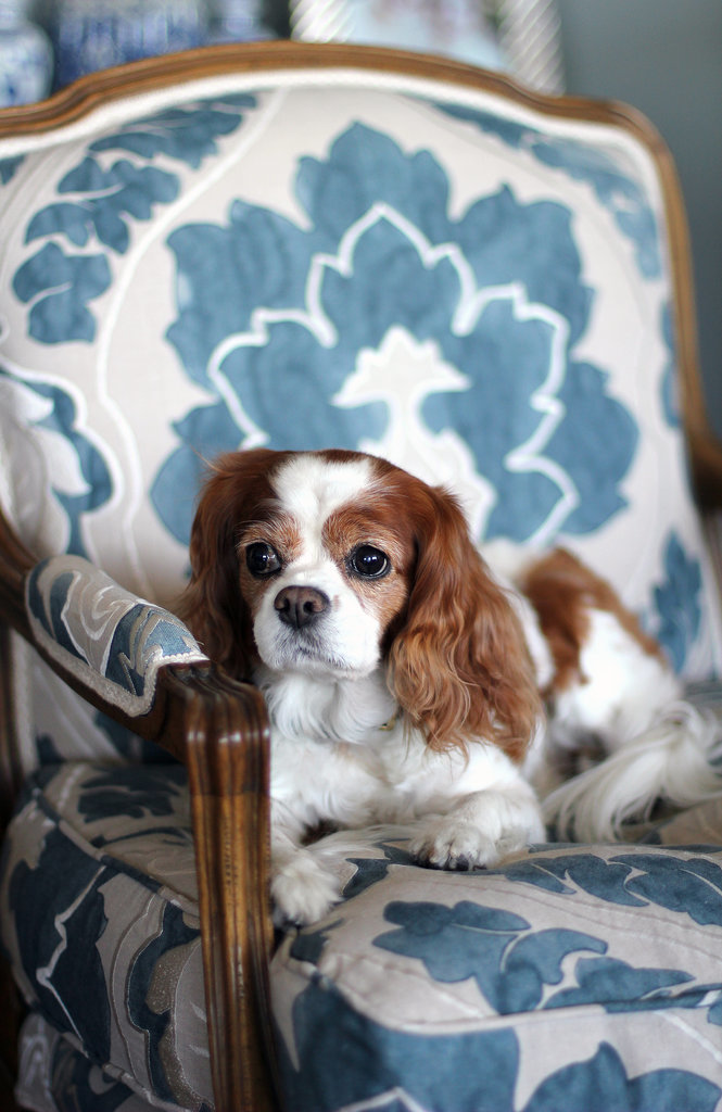 Delphi, an 11-year-old Cavalier King Charles Spaniel, is another cute addition, don't you think?