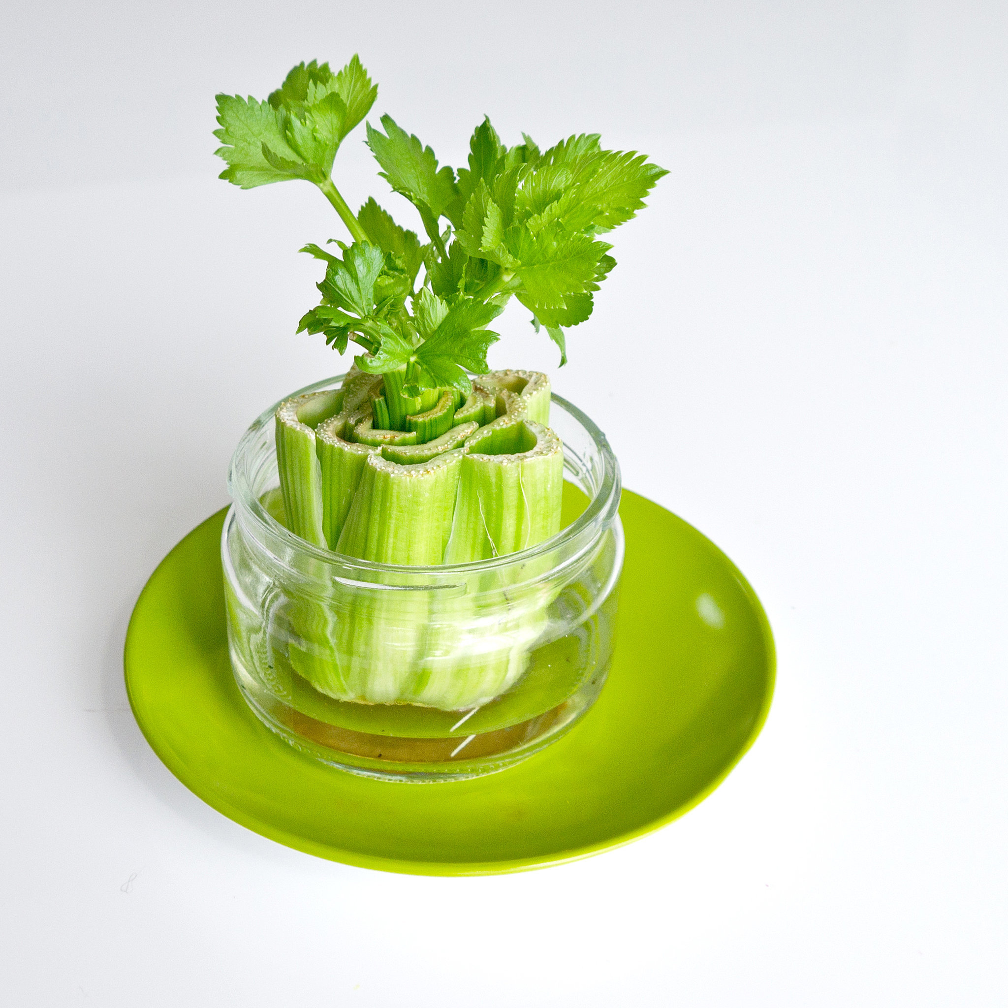 16 Foods That Ll Re Grow From Kitchen Scraps: POPSUGAR Smart Living
