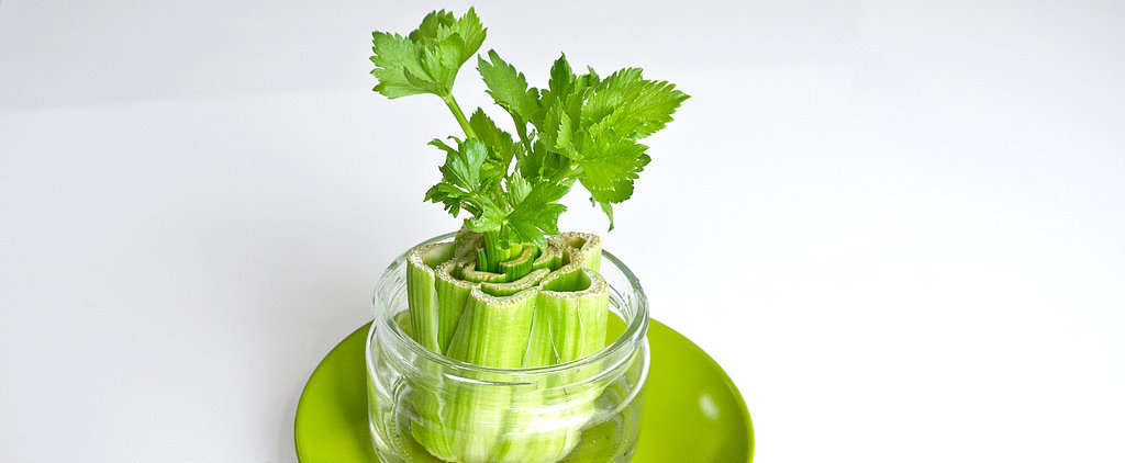 Sprout Your Own Celery Farm