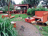 Hawaii's Amazing Cat Sanctuary