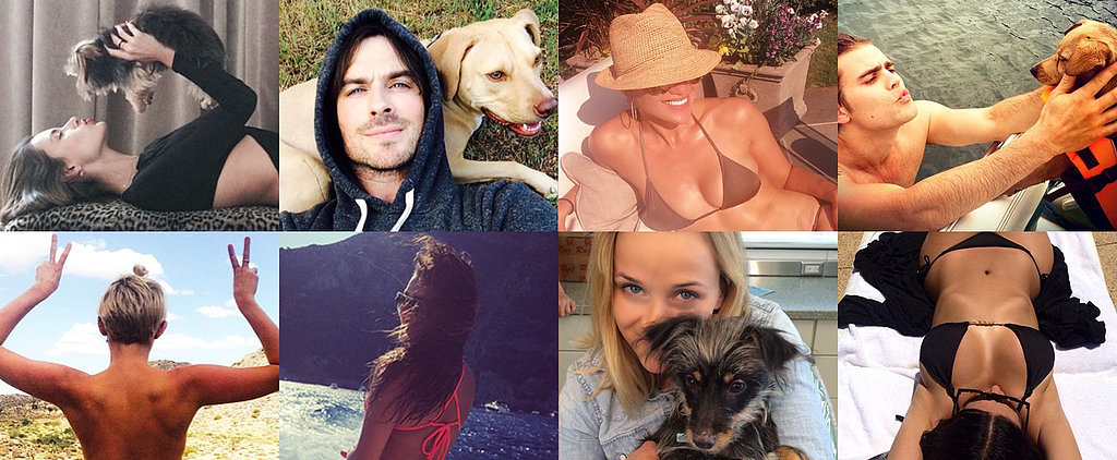 Bikinis and Puppies Take Over This Week's Cutest Celebrity Candids