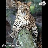 Big Cat Rescue Saves Captive Wild Cats from Neglect, Abuse