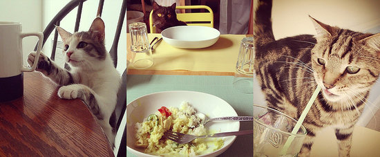 These 20 Cats Have Better Table Manners Than You Do