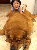 Little Girl Meets Her BFF, Who Happens to Be a Really, Really Large Dog