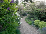 What Monarch Butterflies Taught Me About Garden Design (7 photos)
