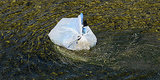 California Plastic Bag Ban Would Be First Of Its Kind In The Nation