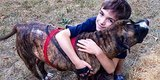 Protective Pit Bull Saves 8-Year-Old Boy From Swarm Of Bees