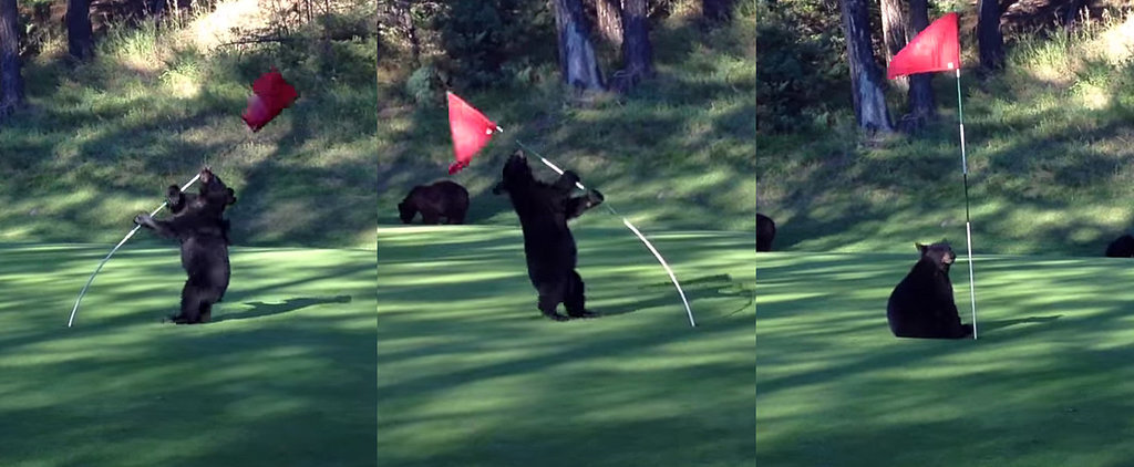 This Little Bear Cub Is Having the Time of Its Life on a Golf Course