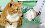 Ask a Vet: Do Cats Really Need Vaccines Every Year?