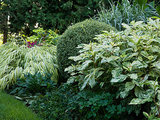 Great Garden Combo: Play With Foliage Patterns in a Border (5 photos)
