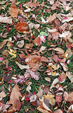 5 Ways to Put Fall Leaves to Work in Your Garden (9 photos)