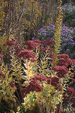 8 Perennials for Great Fall Color (6 photos)