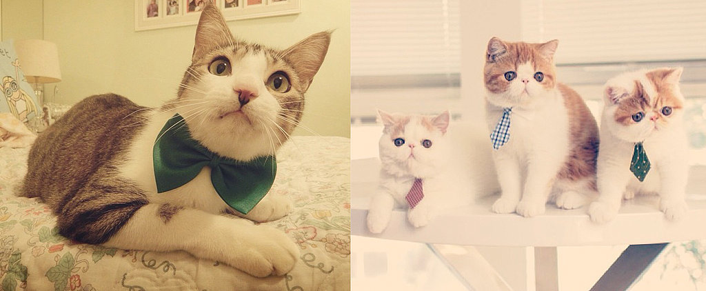 6 Purrfect Career Lessons From Cats